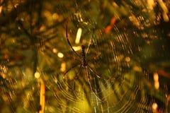 Spindel med suddig bakgrund Fotografering för Bildbyråer
