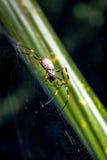 Spindel ner under Fotografering för Bildbyråer