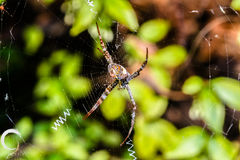 Spindel och affärsföretag royaltyfri bild
