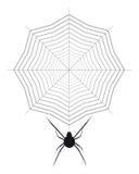 Spindel och cobweb royaltyfri illustrationer