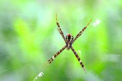 Spindel och cobweb royaltyfri fotografi