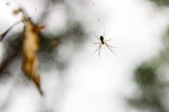 Spindel och dess rengöringsduk Royaltyfri Bild