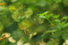 Spindel och dess rengöringsduk Arkivfoton