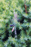 Spindel och dess rov royaltyfria foton