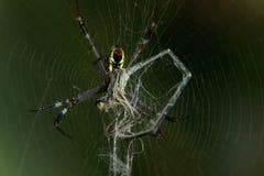 Spindel och drake arkivfoto