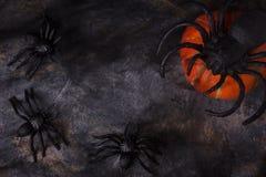 Spindel och pumpa på rengöringsduk med kopieringsutrymme för allhelgonaafton Fotografering för Bildbyråer