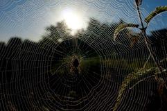 Spindel och rengöringsduk Royaltyfri Bild