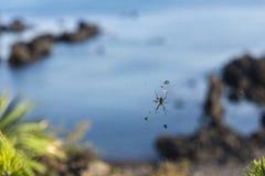 Spindel och rengöringsduk Fotografering för Bildbyråer