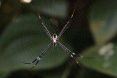 Spindel och silke royaltyfri fotografi