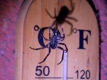 Spindel och skugga arkivbild