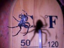 Spindel och skugga royaltyfria bilder