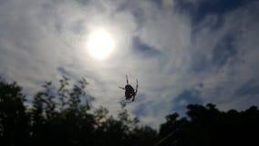 spindel och sol Arkivbilder