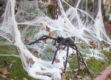 Spindel och spindelnät. Royaltyfri Foto