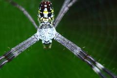 Spindel och spindelrengöringsduk Arkivfoto