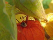 Spindel på blommakrypnaturen Arkivbilder