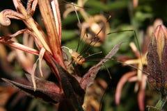 Spindel på blommamakrofotografi Arkivbilder