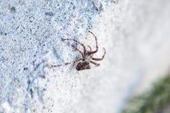 Spindel på chalets vägg, Kanada arkivbilder