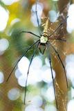Spindel på cobweb royaltyfri foto