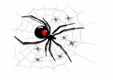 Spindel på codweb arkivbilder
