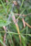 Spindel på den gröna bakgrunden Arkivfoto