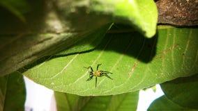 Spindel på den gröna leafen Arkivbilder