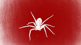 Spindel på den röda väggen arkivfoton