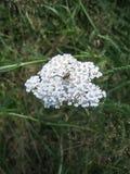 Spindel på en blomma arkivfoto