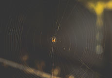 Spindel på en rengöringsduk i solljuset Arkivfoto