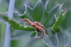 Spindel på en stam av gräs i trädgården Royaltyfri Fotografi