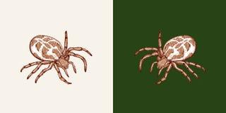 Spindel på en vit bakgrund och en enhetlig grön bakgrund vektor illustrationer