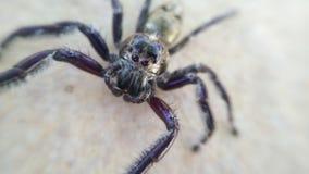 Spindel på golvbakgrunden Arkivbilder