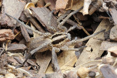 Spindel på jordningen arkivbild