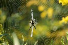Spindel på kringstrykandet Arkivfoton