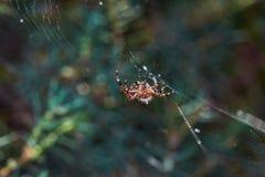 Spindel på netto Arkivfoton