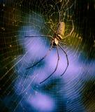 Spindel på rengöringsduk Arkivfoto