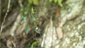 Spindel på rengöringsduk royaltyfria foton