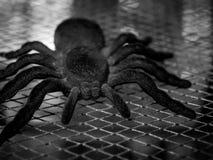Spindel på rengöringsduk royaltyfria bilder