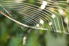 Spindel på rengöringsduk Royaltyfri Bild