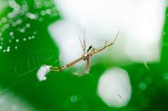 Spindel på rengöringsduk Fotografering för Bildbyråer