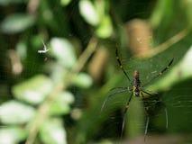 Spindel på rengöringsduk Royaltyfri Foto