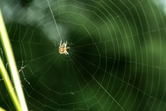 Spindel på rengöringsduk Arkivbilder