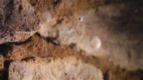 Spindel på rengöringsduk med vattendroppar stock video