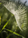 Spindel på rengöringsduken Arkivfoton