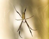 Spindel på rengöringsduken Royaltyfria Bilder