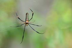 Spindel på rengöringsduken Arkivfoto