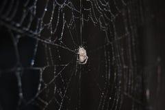 Spindel på rengöringsduken Royaltyfri Fotografi