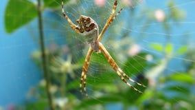 Spindel på rengöringsduken som göras i mitt av växterna i trädgården royaltyfri bild