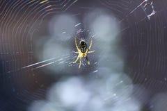 Spindel på rengöringsduken som svänger i vinden Royaltyfria Bilder