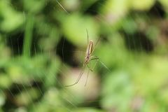 Spindel på spidernet arkivbild