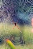 Spindel på spindelnät Royaltyfri Fotografi